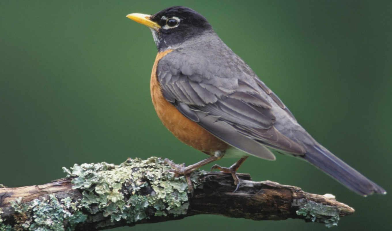 птицы, птица, zhivotnye, птичка, детали, изображения, серая, категории,