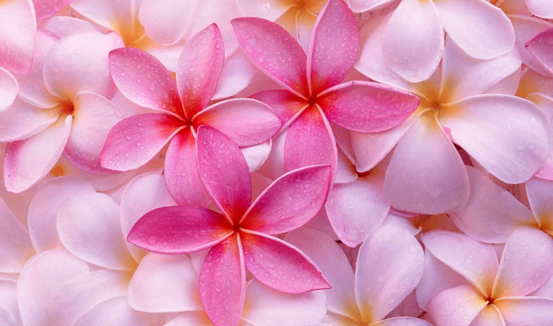 цветы, красивые, stunningly, очень, мар, розовые,