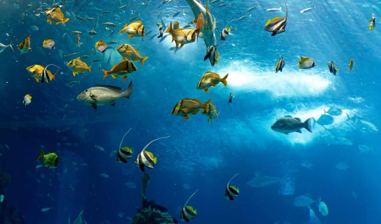 fish, tapete, underwater, море, стена, coral, murals, под, водой, zidne,