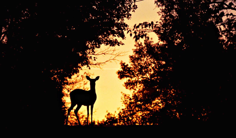hunting, лань, ночью, охоты, рыбалка, за, еще, world,