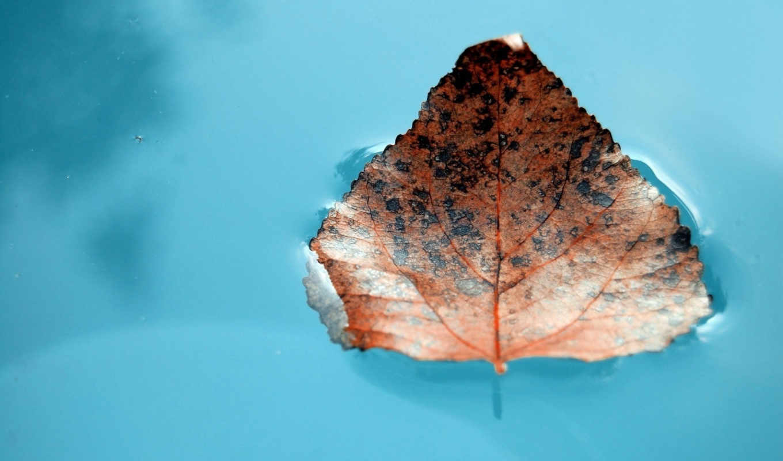 ,вода,лист,макро,