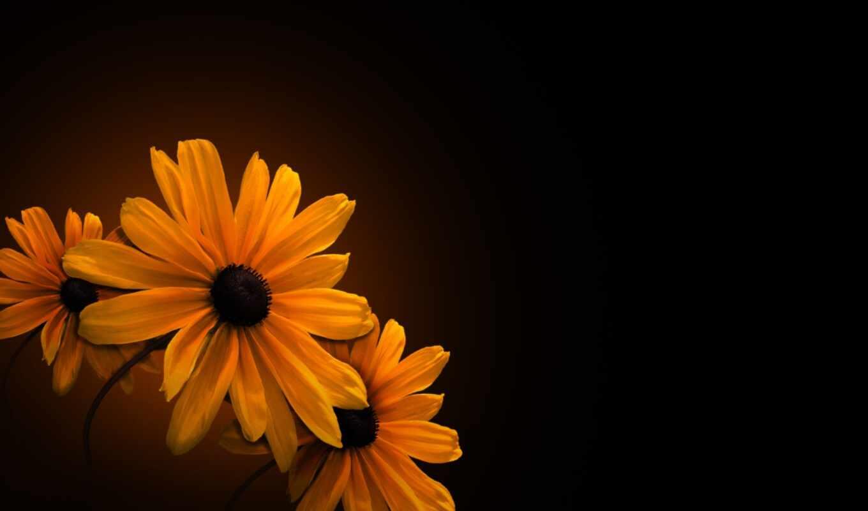 цветы, fone, оранжевые, черном,