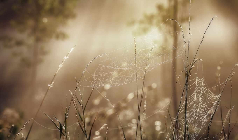 свет, утро, summer, макро, туман, лес, только, daily, заставки,
