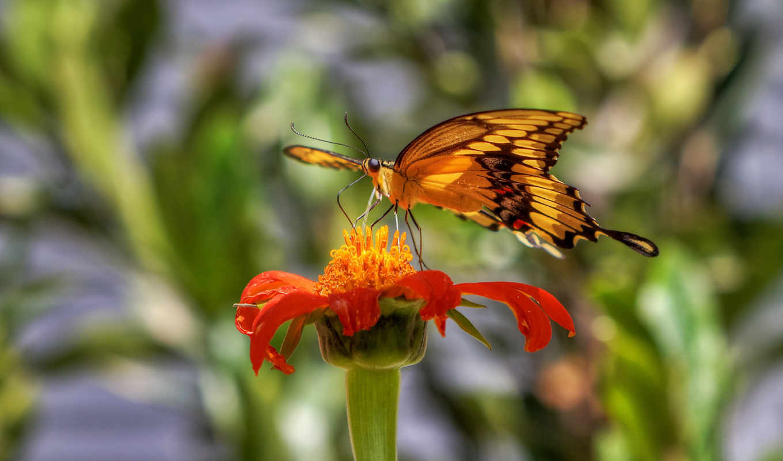 разных, бабочка, разрешениях, красивая,