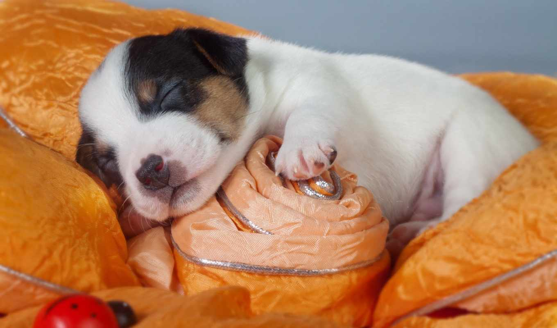 щенок, собака, you, wochenende, bilder, apk, live, xmas,