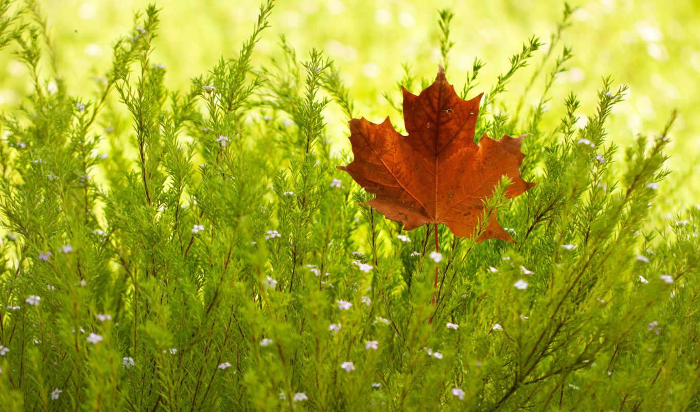 лист, кленовый, зеленой, траве, природа, iphone,
