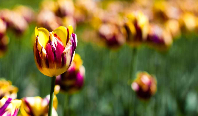 краски, природа, цветы, красноые, желтые,