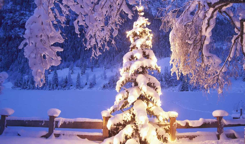 winter, дерево, снег, new, год, огни,