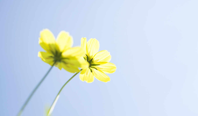 можно, you, one, feel, сделать, цветы, inferior, consent, без,