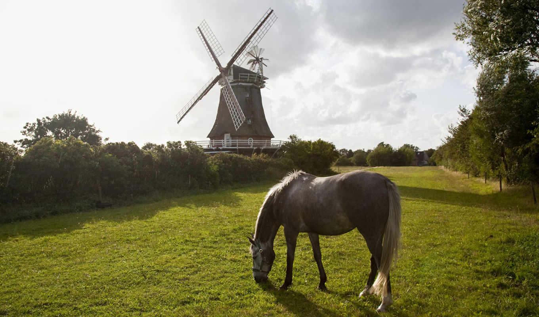 horses, лошадь, природа, mill, деревя, лошади, лошадей, трава,
