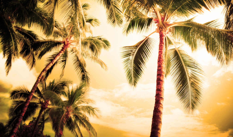 пальмы, природа, palm, summer, трио, вечер, пейзажи -, лермонтова, нояб, пляжи,