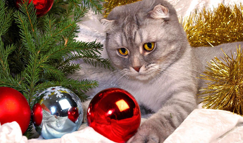 новогодние, god, котенок, метки,
