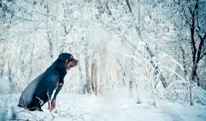 winter, собака, друг, высоком,