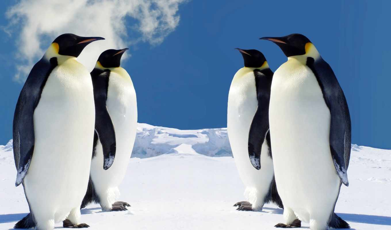 chim, cánh, cắt, mắt, con, khi, tình, thấy, cần, bạn, của,