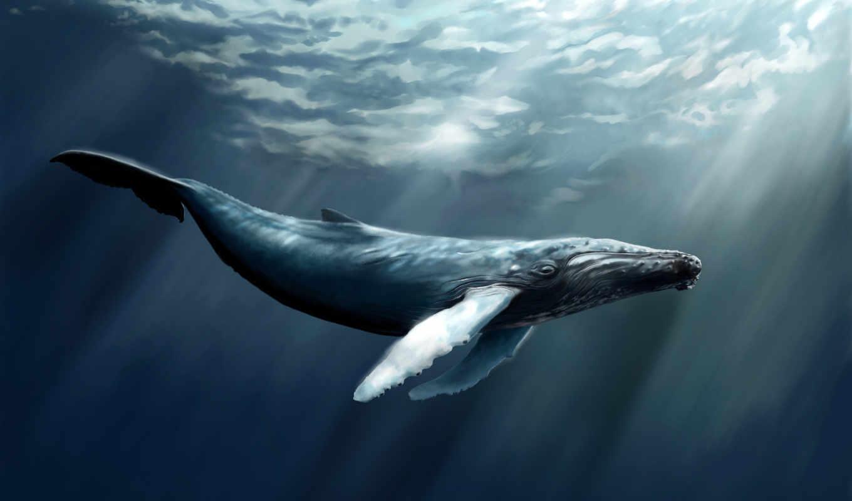 кит, море, fish, water, кашалот, art,