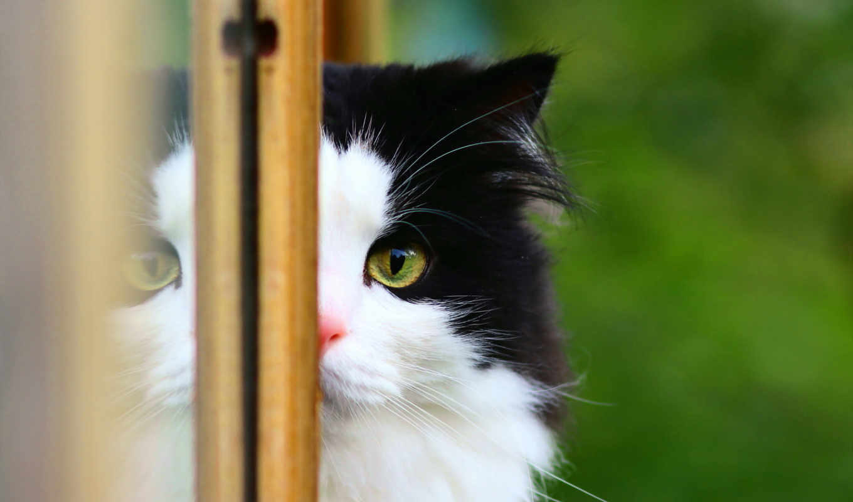 кошка, окно, картинка,