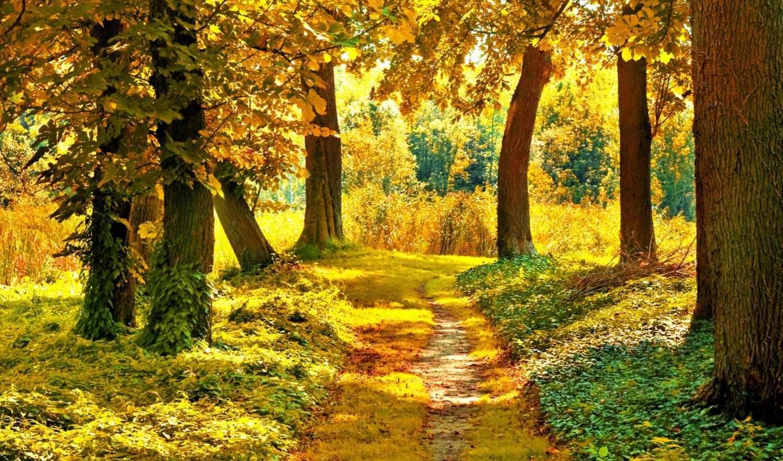 осень, деревья, солнце, тропинка, лес, листва, картинка,