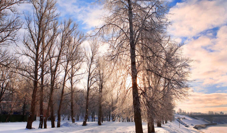 деревя, снег, winter, park, природа,