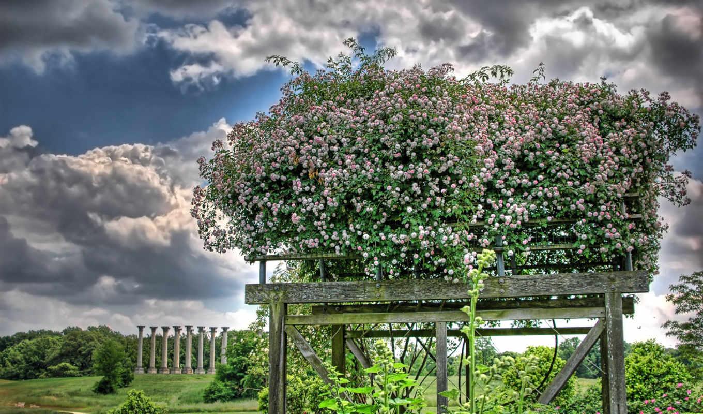 widescreen, sdjhkrrr, чтобы, free, garden, tree, field, home, summer, изображение, картинку,