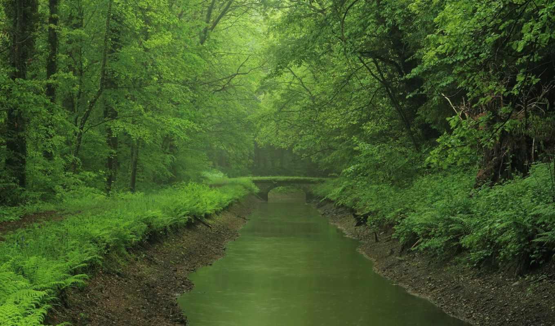 река, мост, лес, green, лесу, густом, desktop, зелёная, картинка, картинку,