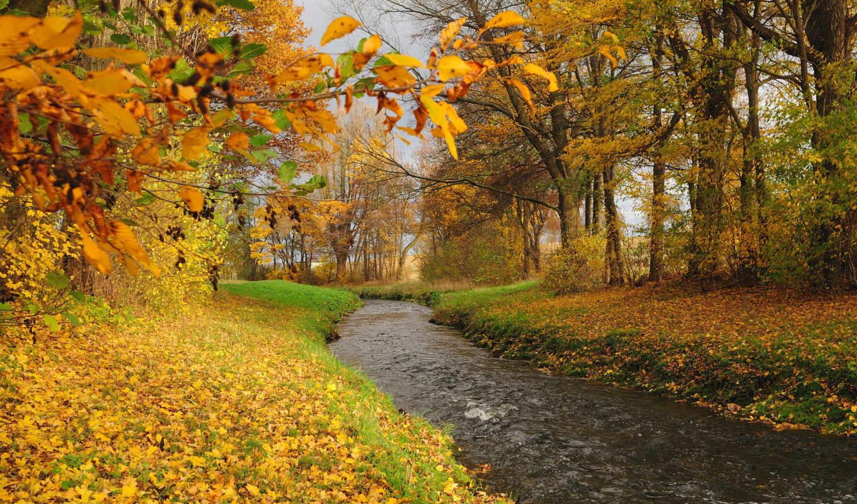 осень, лес, деревья, река, online, природа, landscape, мб, количество,