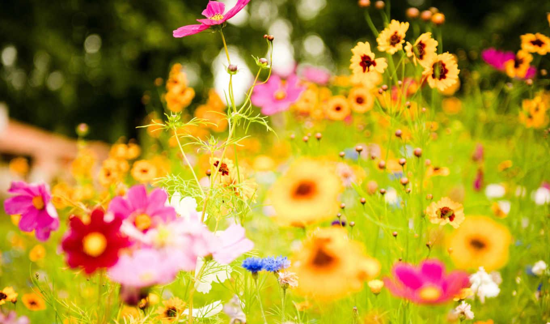 цветы, colorful, uploaded, resolution, январь, having,