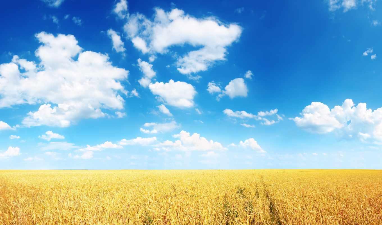 колосья, поле, пшеница, небо, неба, облака, fone,