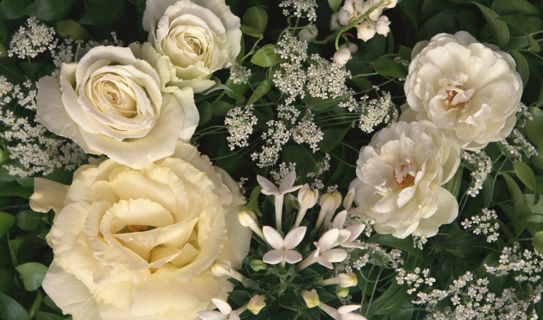 розы, белые, роз, букет, белых, cvety,