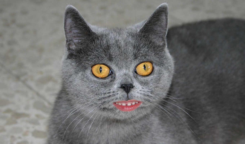 кот, губы, фотожаба