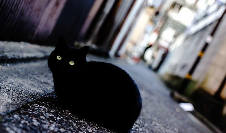 кот, black, animal, заставка, окно, улица, тег, фото