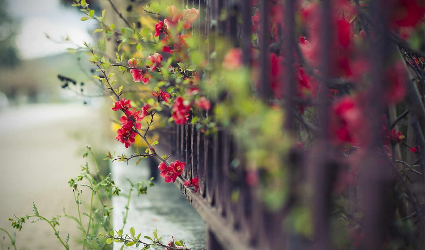 fence, flowers,