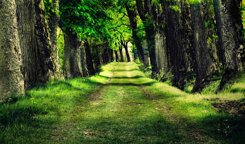 природа, красивые, трава, деревья, лес,