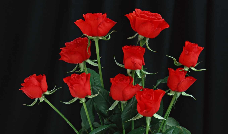 цветы, розы, роза, без, очень,