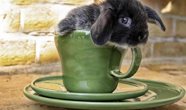 кролики, коллекция, avto,