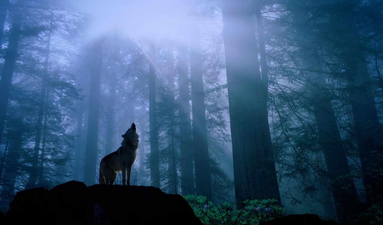 лесу, video, zhivotnye, ночном, лес, страшные,