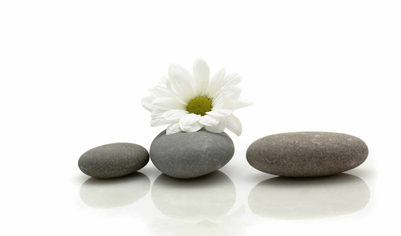 ромашка, цветок, камни, минимализм, камнях, смотрите,