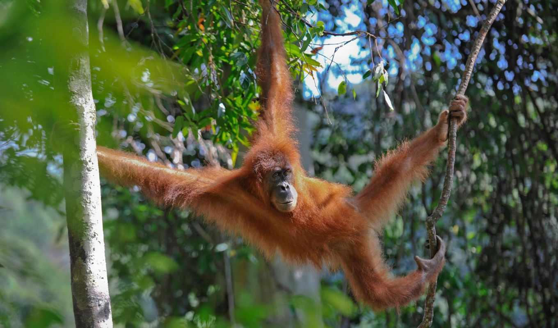 rainforest, tropical, rain, map, deforestation, forest, sumatra, etsy,