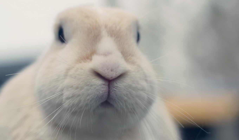 заяц, белый, кролик, усатый,