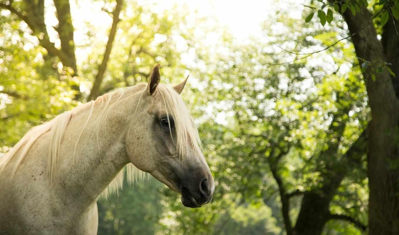 грива, лошадь, морда,
