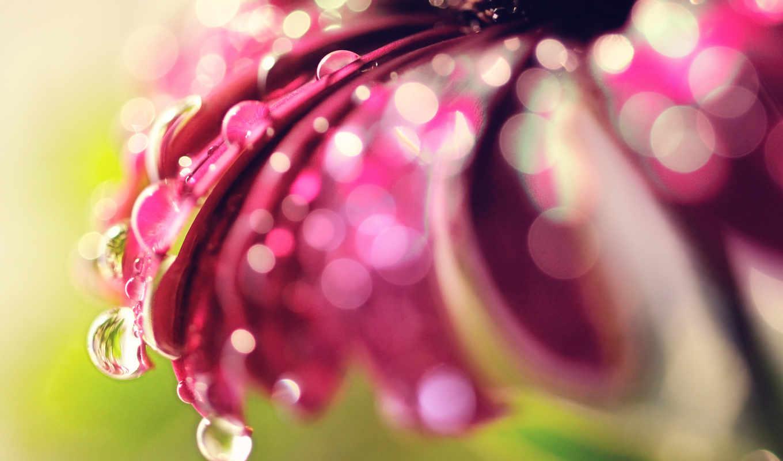 makro, цветок, боке, блики, капли, нояб,