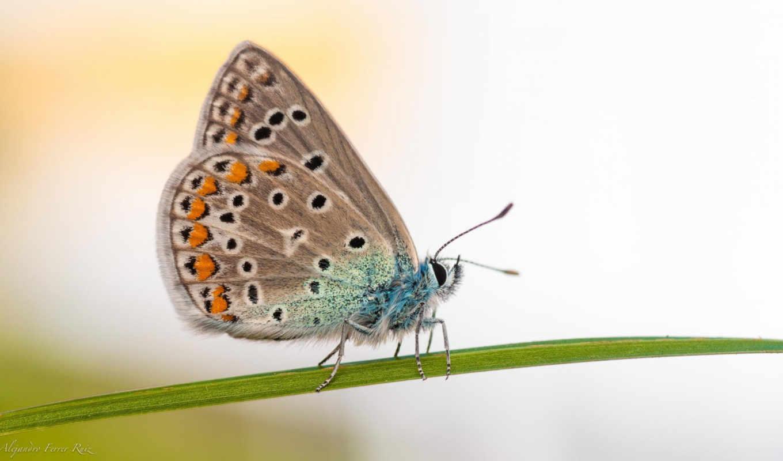 бабочка, зелёный, desktop, макро, трава,