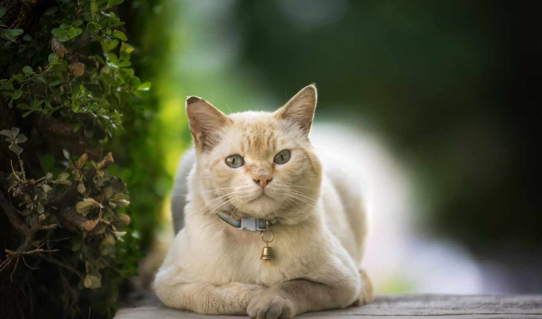 zhivotnye, tapety, animals, кошки, ошейник, коллекция, кот,