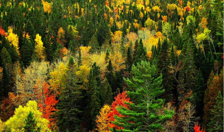 del, norte, los, que, flora, america, fauna, más,