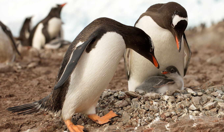 пингвины, животные, антарктика,
