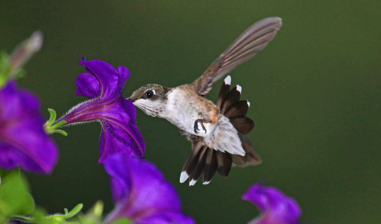 nature, birds, heart, 동물, flowers, purple, animals, hummingbirds,