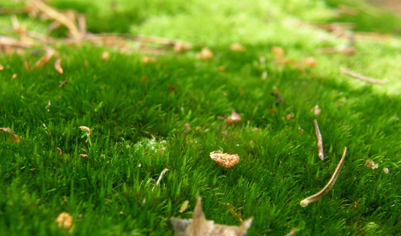 ковёр, зелёный, трава, лес, роса, листья, природа, осень, trees, листва,