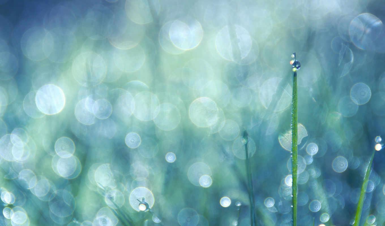 капли, трава, дождя,