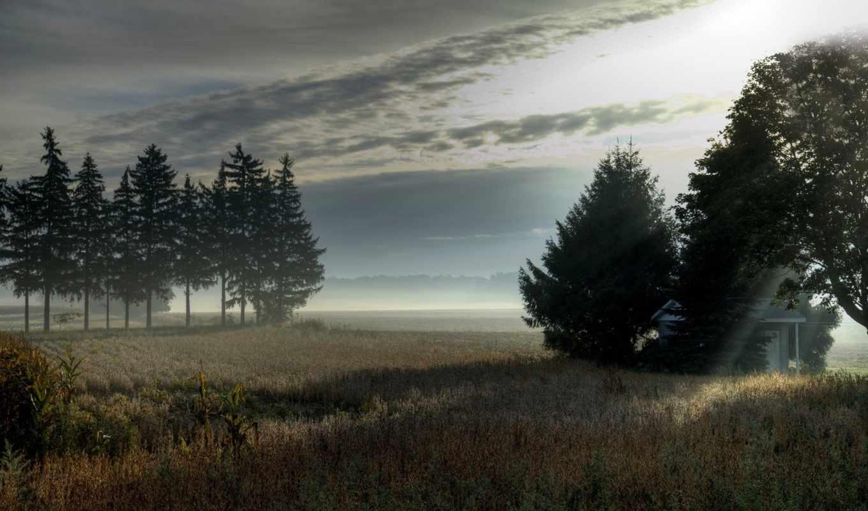 утро, поле, туман, деревья, пейзаж, auto,
