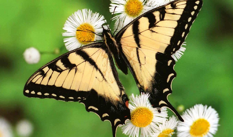 бабочки, свой, стиль, найти, близка, образу, красивые,