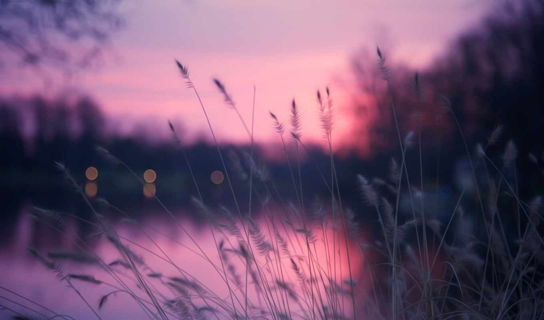 природа, вечер, трава, река, блики, вечера,